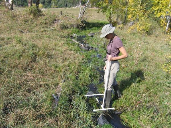 Flynn Creek MIM - starting search for greenline